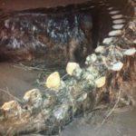 Ritrovata la carcassa del mostro di Loch Ness. News o fake? Nessie fa di nuovo parlare di sé (FOTO e VIDEO)