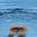 Può fare il bagno chi abita a 200 mt dal mare, il chiarimento del governo