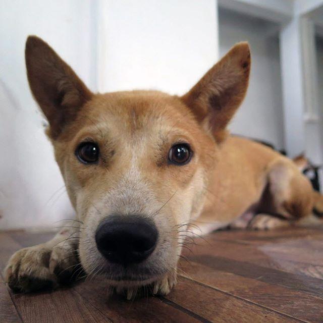 """Shenzhen, vietato il consumo di carne di cani e gatti, Humane Society International: """"Un buon inizio!"""""""