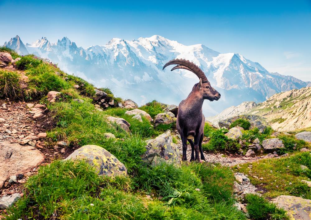 Estate 2021, le vacanze italiane on the road. Tour della Valle d'Aosta