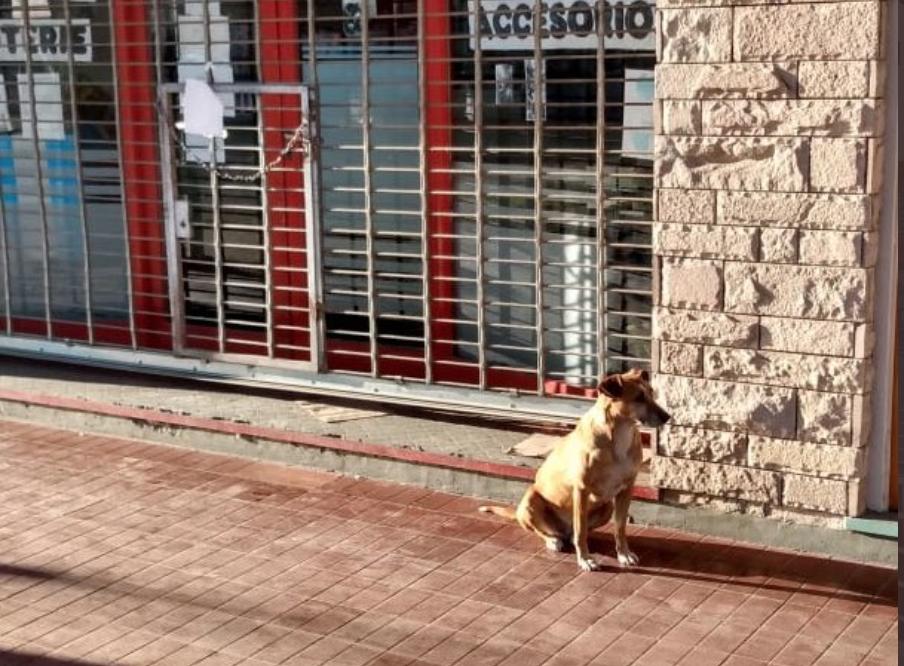 Argentina, per un mese aspetta la padrona deceduta: ecco la storia di Bianca