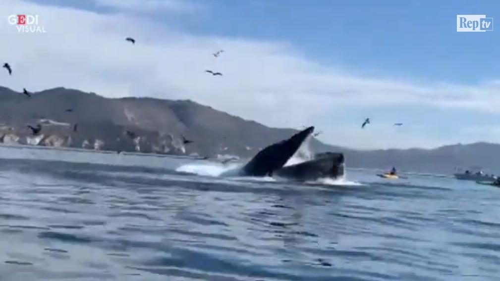 Due donne finiscono nella bocca di una balena che poi le lascia andare (VIDEO)