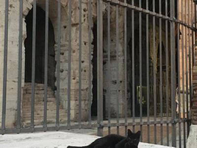 """Roma: addio a Nerina, la gatta nera che """"custodiva"""" da dieci anni il Colosseo"""