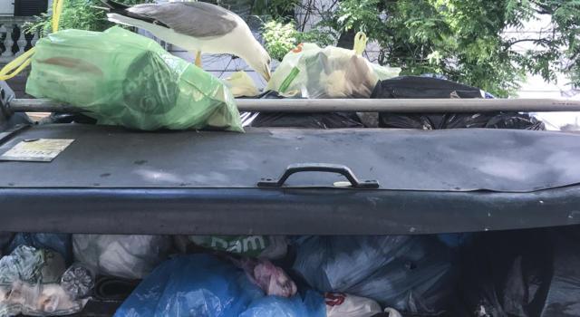 Orrore a Bologna, cadavere di donna trovato in un cassonetto, poche ore dopo scoperto il fidanzato impiccato in casa
