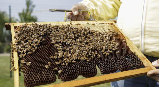 Scopri come perdere i kg di troppo e la pancetta, con miele e cannella, durante la notte semplicemente dormendo