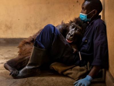Addio Ndakasi, è morta la gorilla dei selfie