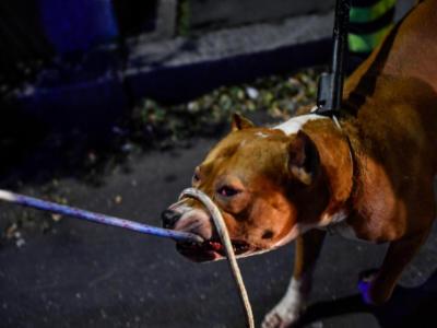 Orrore a Sassuolo, Carla sbranata da due cani nel giardino di una villetta davanti a una bambina